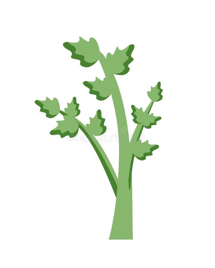 Selleri odlade persiljaväxten, suckulent blad stock illustrationer