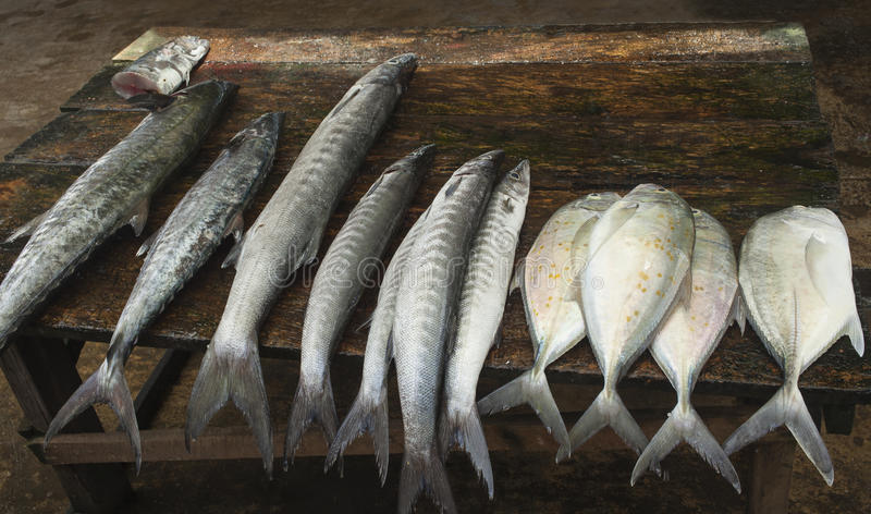Selling fish stock photo