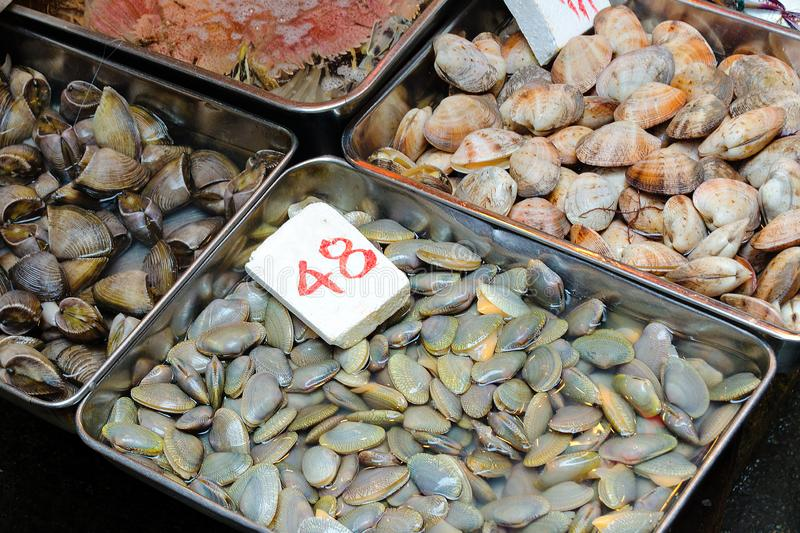 Selling fresh seafood, trays with various shells - Manila, Surf Clams, Ocean Quahogs, close up. royalty free stock photo