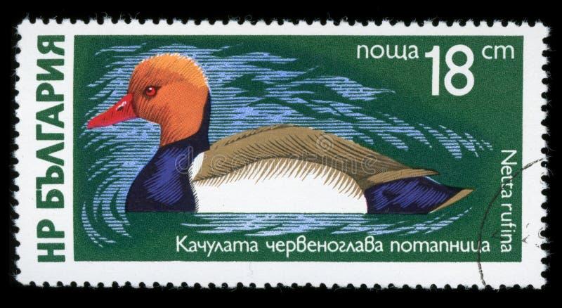 Sello de la serie del ` de las aves acuáticas del ` de Bulgaria, 1976 imágenes de archivo libres de regalías