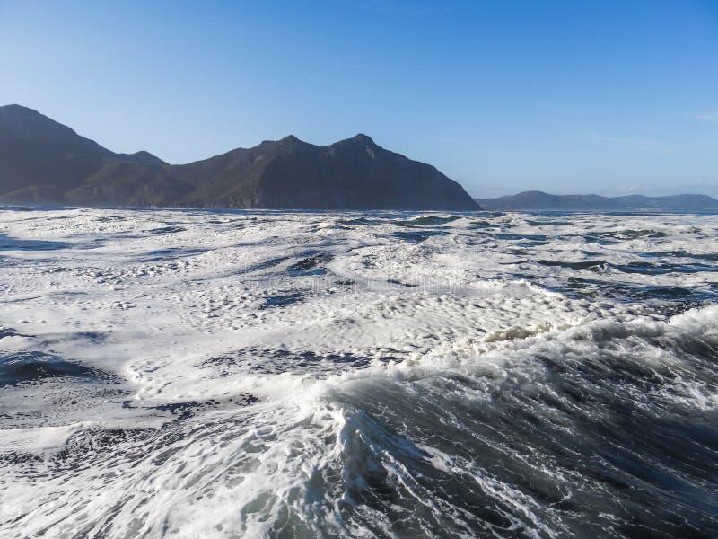Sellos en una isla del sello de la bah?a de Hout en Cape Town, Sur?frica fotos de archivo