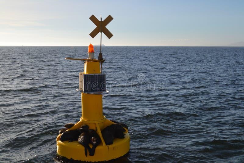 Sellos que flotan en un faro amarillo en el mar imágenes de archivo libres de regalías