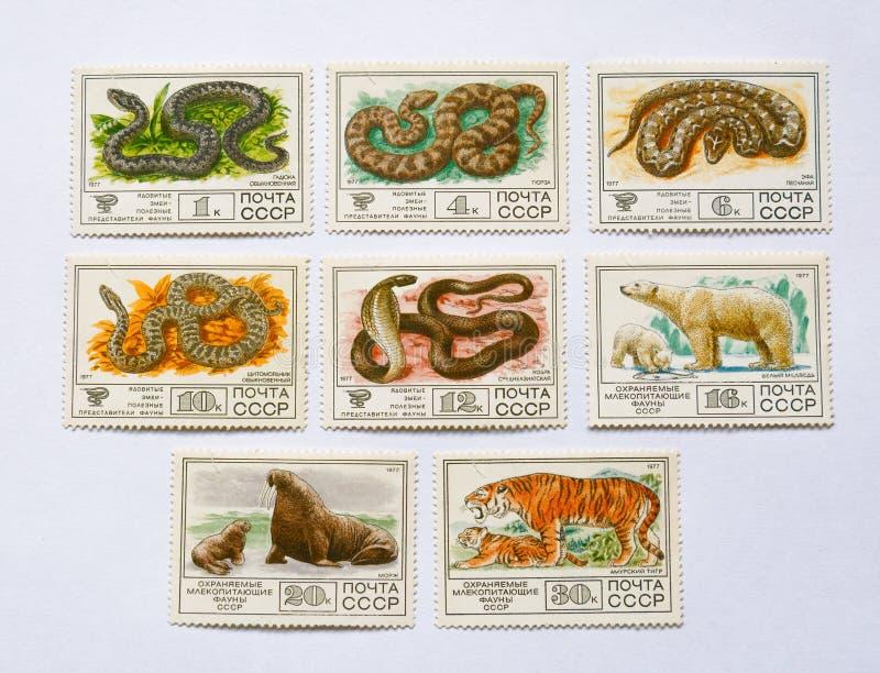 Sellos, serpientes y animal soviéticos viejos fotografía de archivo libre de regalías