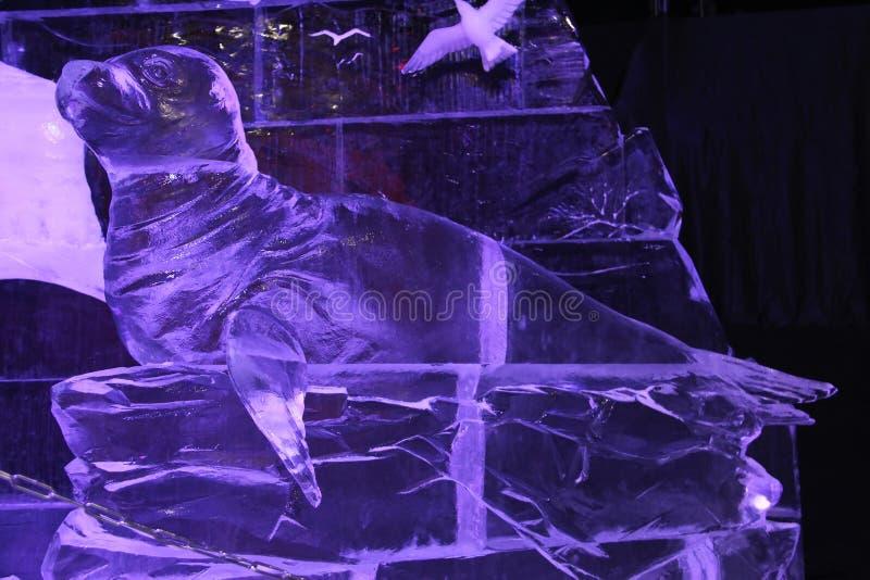 Selo do mar feito do gelo fotos de stock royalty free