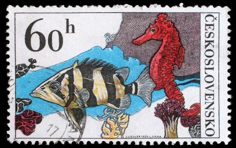Selo impresso em Checoslováquia, em mostras Datrioides Microlepis e em cavalo de mar foto de stock