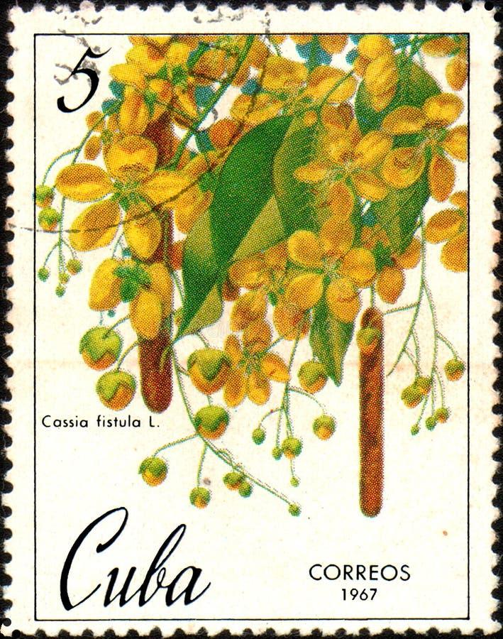 Selo impresso em Cuba, fístula da cássia da imagem das mostras, cerca de 1967 fotografia de stock