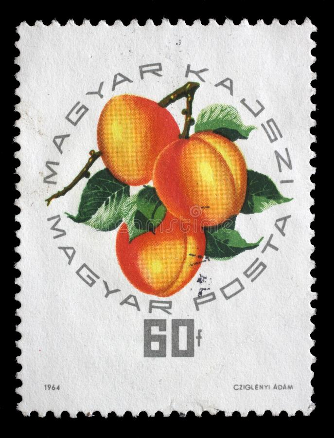 Selo impresso em Hungria, abricó do Hungarian das mostras imagem de stock