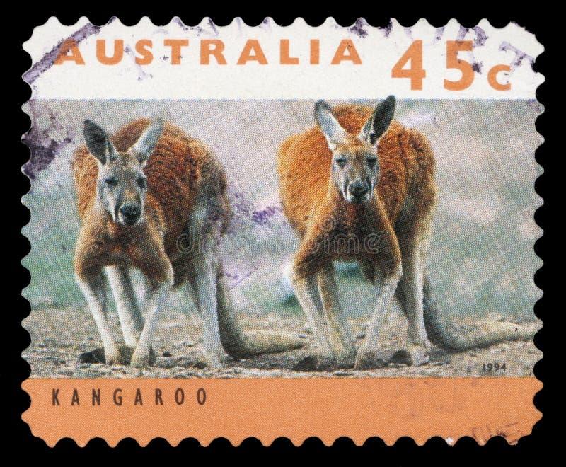 Selo impresso por Austrália, canguru das mostras dois foto de stock