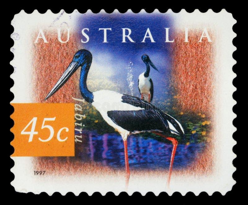Selo impresso por Austrália, garça-real das mostras fotografia de stock