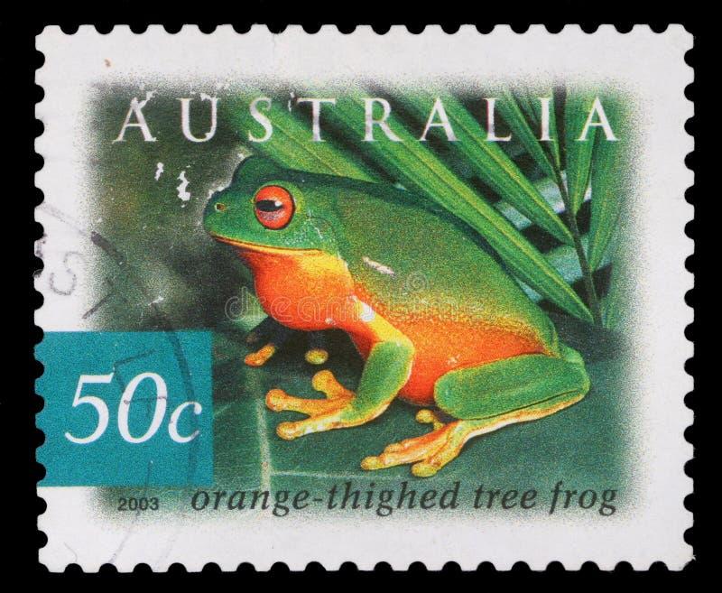Selo impresso por Austrália, rã das mostras foto de stock royalty free