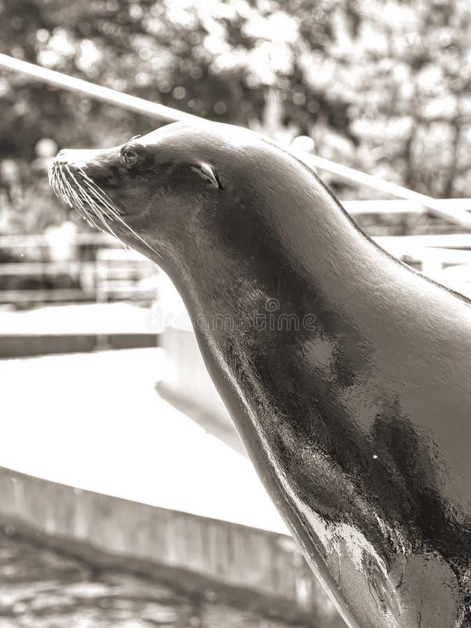 Selo no jardim zoológico de Budapest foto de stock royalty free