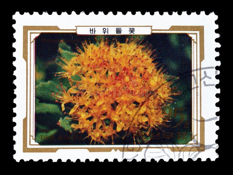 Selo postal cancelado impresso pela Coreia do Norte imagem de stock
