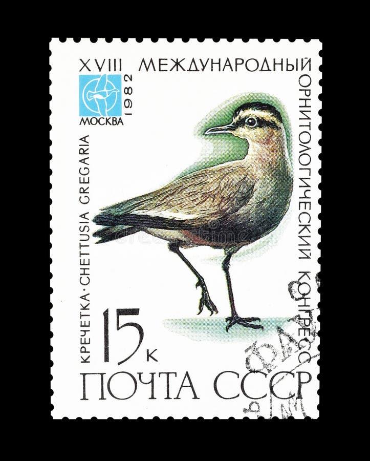 Selo postal cancelado impresso por União Soviética imagem de stock