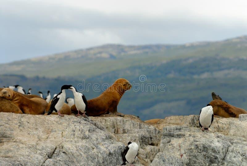 Selos de elefante e rei Cormorants fotos de stock royalty free