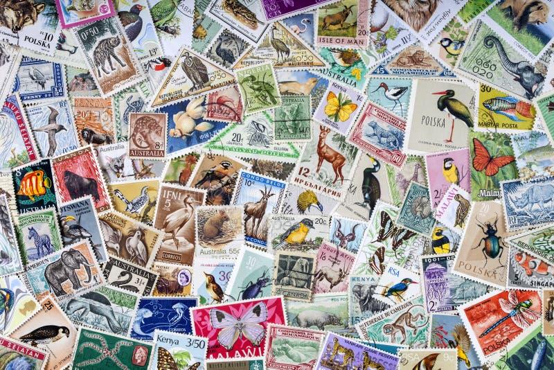 Selos postais mundiais dos animais selvagens - filatelia foto de stock royalty free