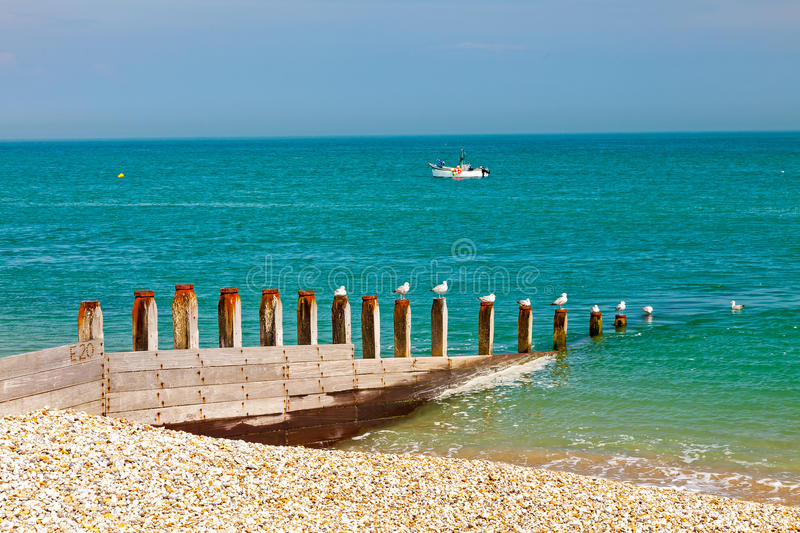 Selsey Bill West Sussex England. Row of Seagulls on a timber groyne Selsey Bill Beach West Sussex England UK Europe royalty free stock photos