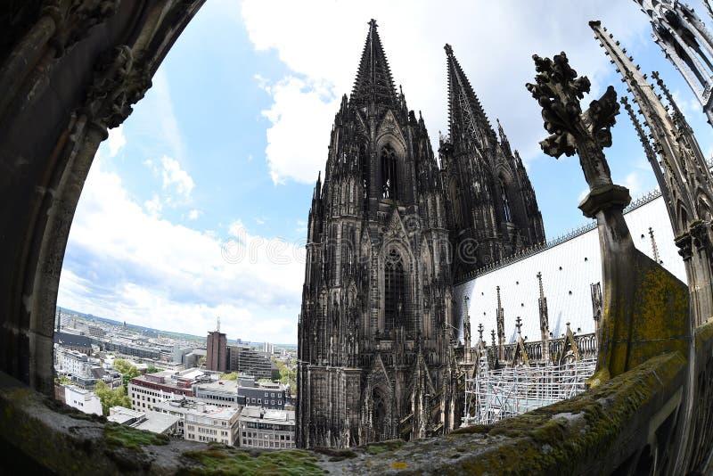 Seltene Ansicht des Köln-Kathedralendachs lizenzfreie stockfotografie