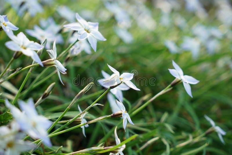 Seltene Pflanzen aus anderen Ländern stockfotos