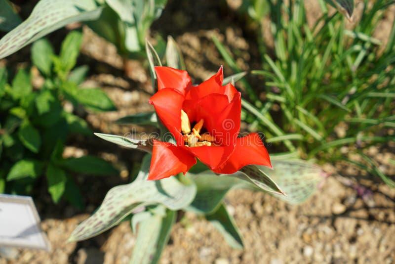 Seltene Pflanzen aus anderen Ländern lizenzfreie stockfotos