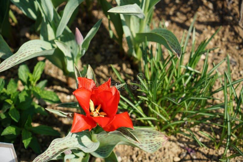 Seltene Pflanzen aus anderen Ländern lizenzfreies stockfoto