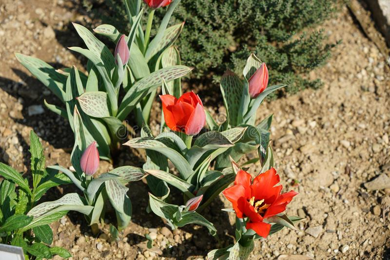 Seltene Pflanzen aus anderen Ländern lizenzfreies stockbild