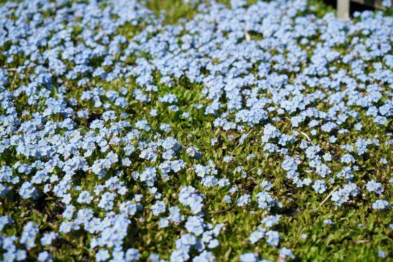 Seltene Pflanzen aus anderen Ländern lizenzfreie stockfotografie