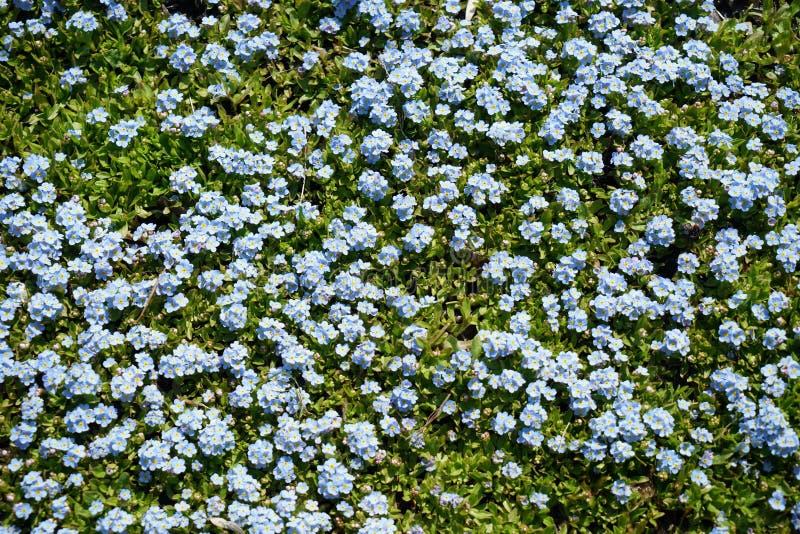 Seltene Pflanzen aus anderen Ländern stockfotografie