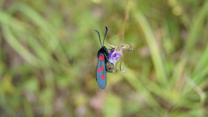 Seltenes Insekt lizenzfreie stockfotografie