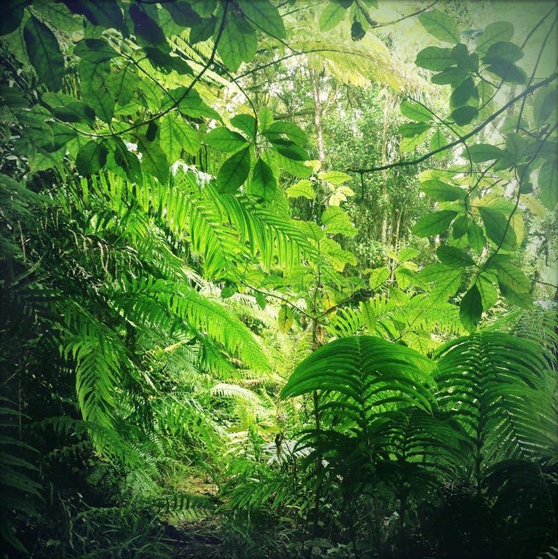 selva fotografía de archivo