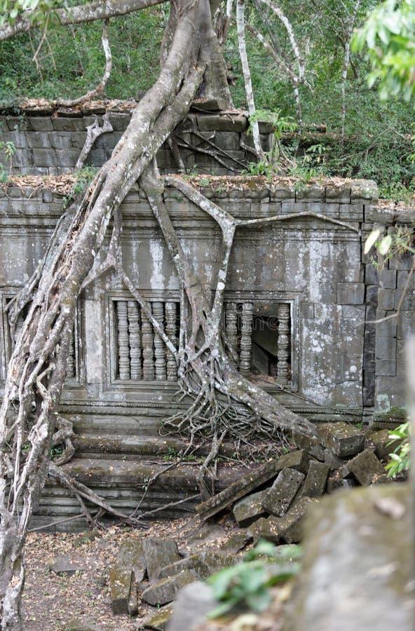 Selva alrededor de Beng Mealea Temple, Camboya imágenes de archivo libres de regalías