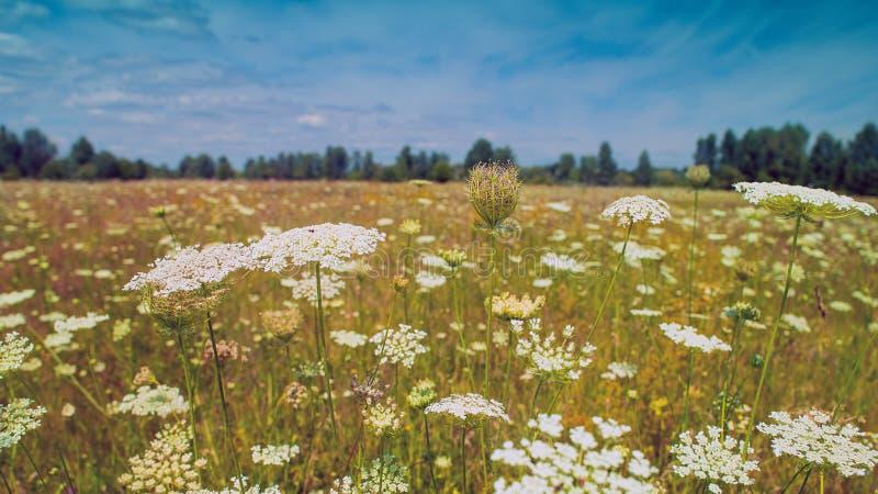 selva Campo selvaggio di estate di bellezza fotografia stock libera da diritti
