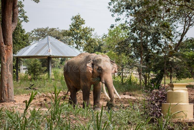 selva chitwan de Nepal del paisaje asiático salvaje de los elefantes cerca dulce pesado del sol de la primavera de Asia de la gen fotografía de archivo