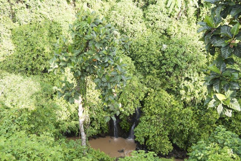 Selva de Bali con dos pequeñas cascadas imagen de archivo