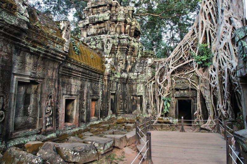Selva de Camboya imagen de archivo