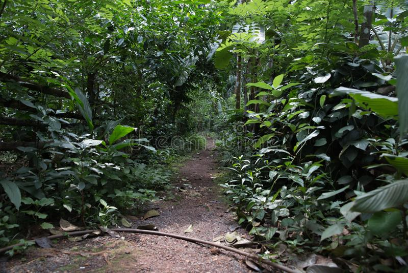 Selva de Goa fotografia de stock