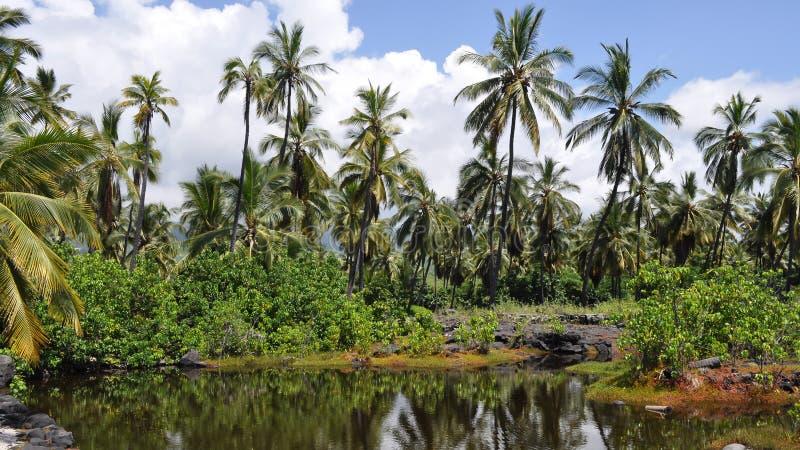 Selva de Hawaii con la pequeña charca y el bosque profundo de las palmeras imagen de archivo