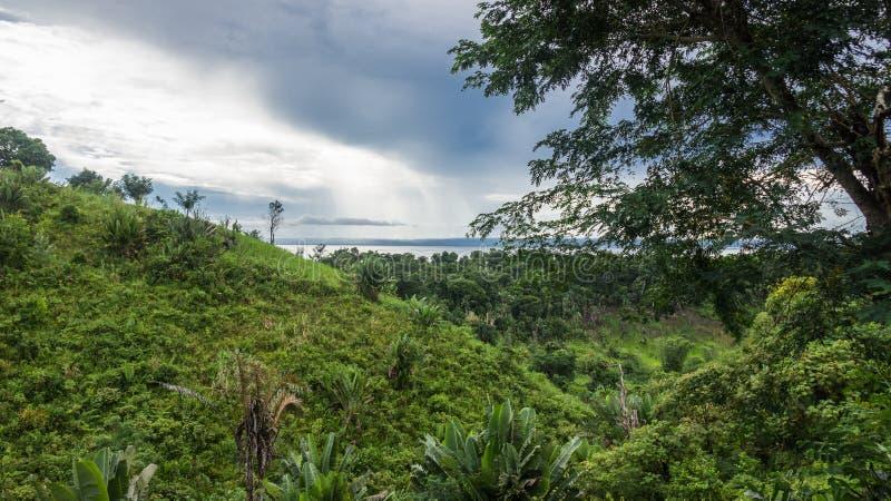 Selva de Ikalalao foto de archivo