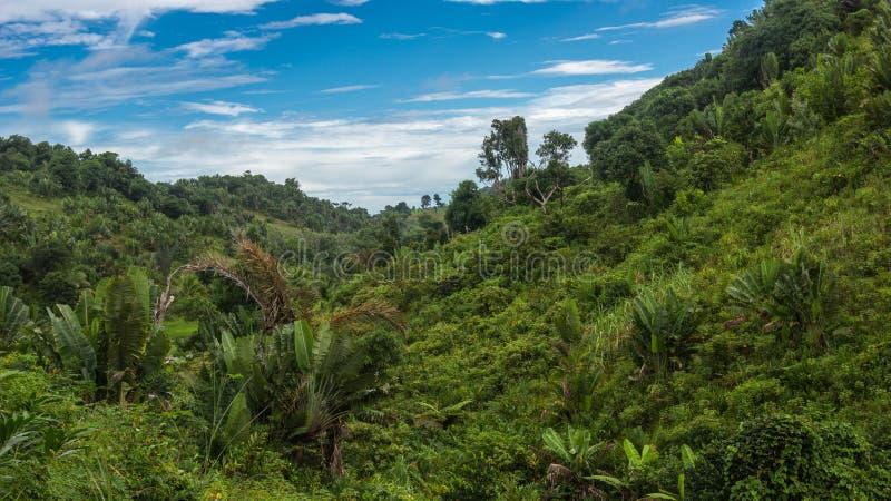 Selva de Ikalalao fotografía de archivo