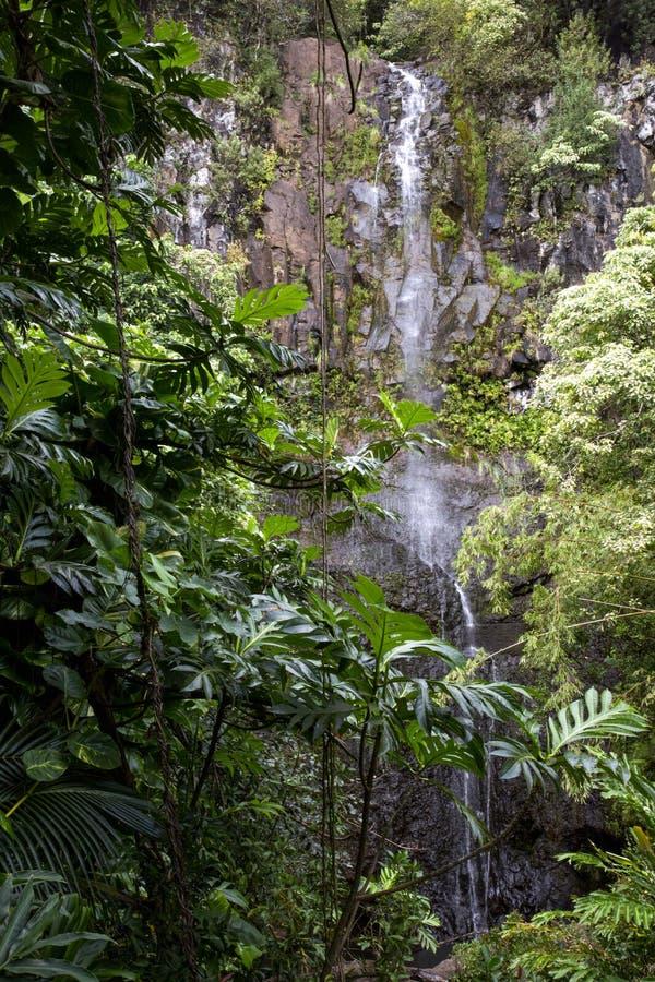 Selva de la cascada imagen de archivo libre de regalías