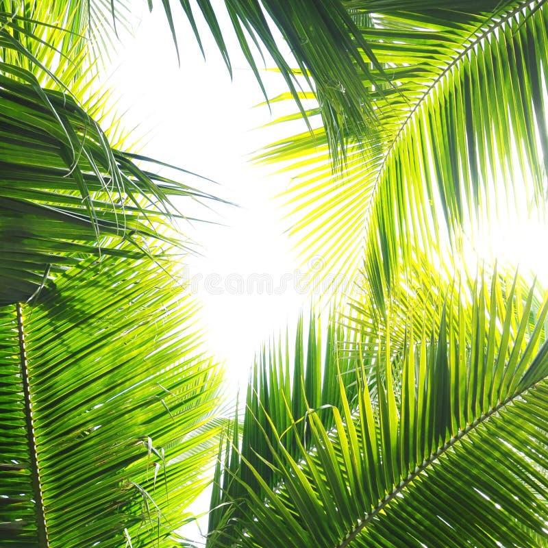 Selva de la palma foto de archivo