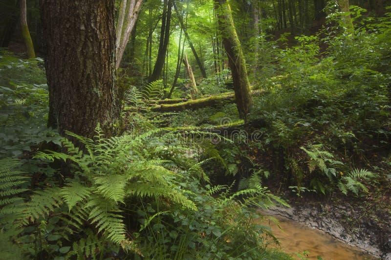 Selva de la selva tropical foto de archivo libre de regalías