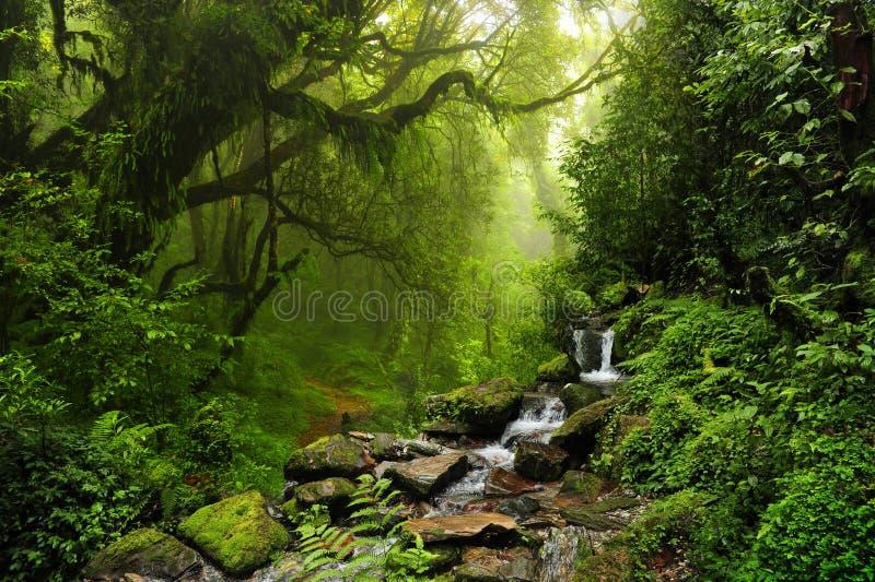 Selva de Nepal fotos de stock royalty free