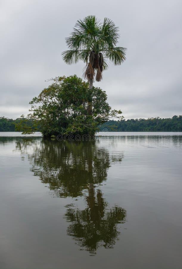Selva del Amazonas imagen de archivo libre de regalías