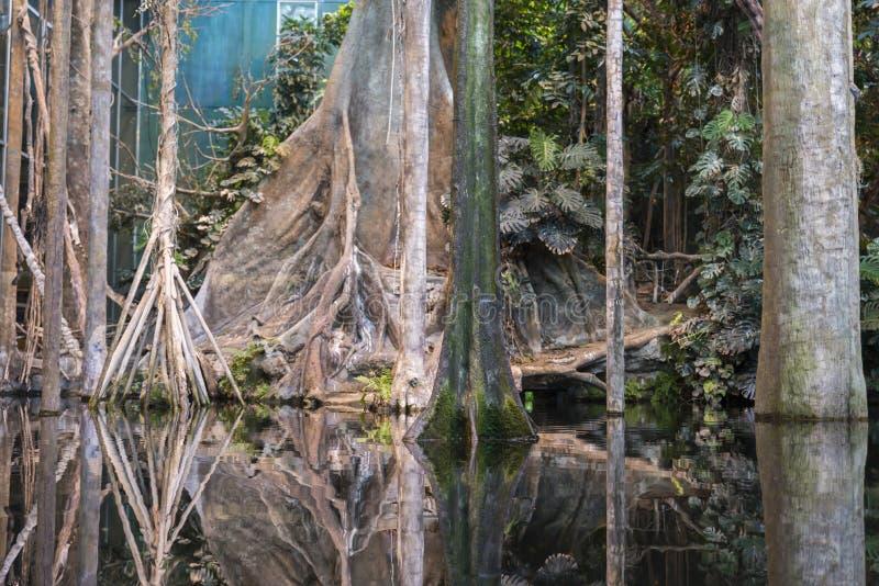 Selva del Amazonas foto de archivo