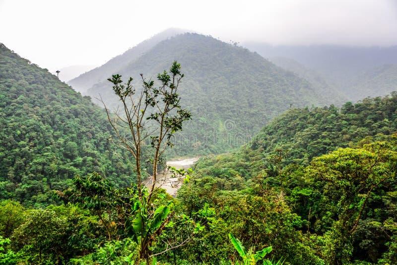 Selva del paisaje en Amazonia de Ecuador imagen de archivo