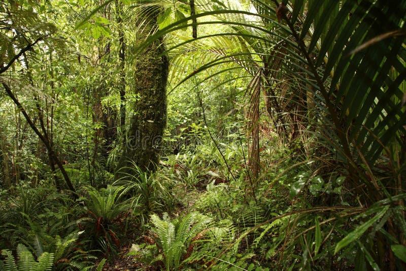 Selva densa fotos de stock royalty free