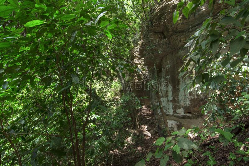 Selva densa al lado del acantilado rocoso imagenes de archivo