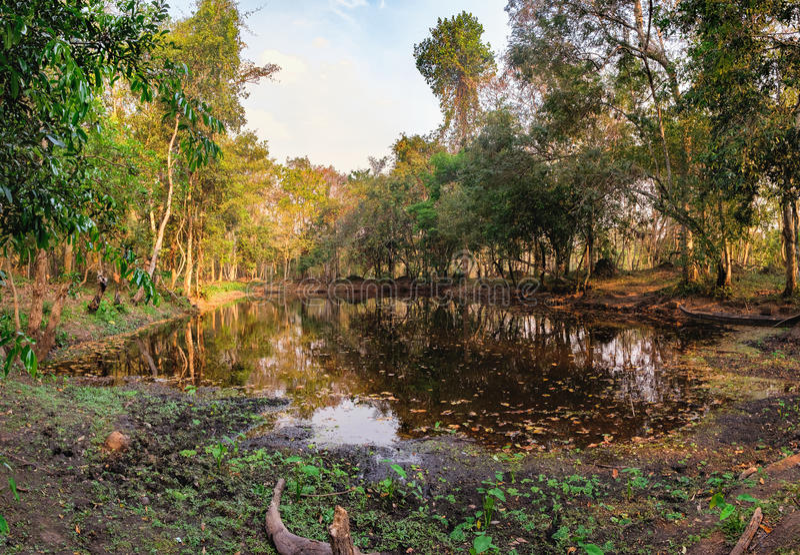 Selva densa cerca de Beng Melea Temple, Camboya foto de archivo
