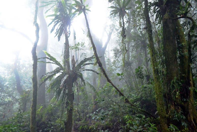 Selva do tropist da chuva imagem de stock royalty free