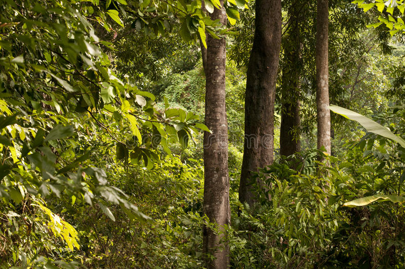 Selva e árvores fotos de stock royalty free